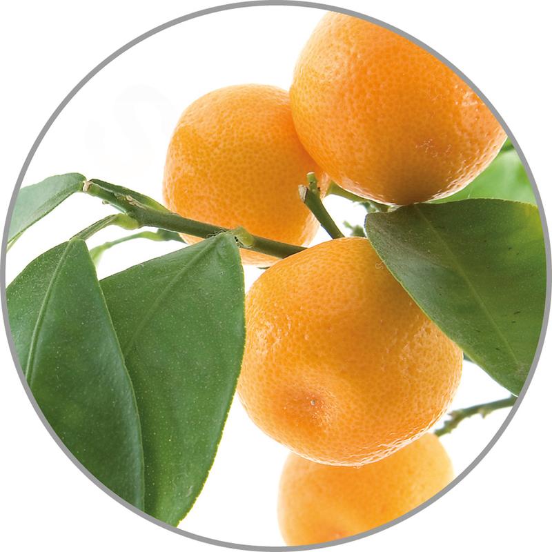 Medisana Vonná esence do aroma difuzérů - pomeranč