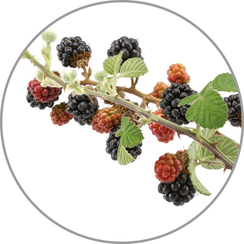 Medisana Vonná esence do aroma difuzérů - lesní plody
